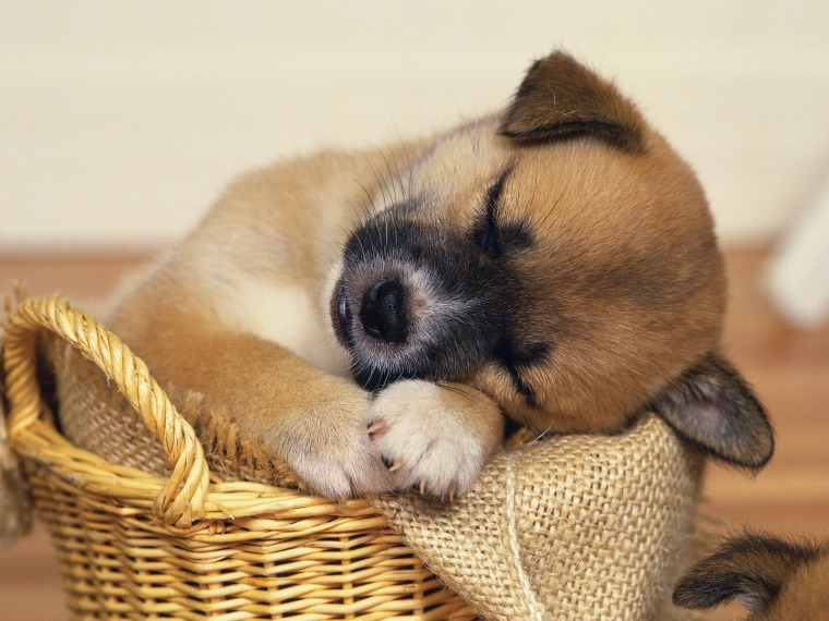 Sleepy-puppies-9415133-1600-1200